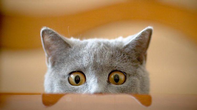 gatti-e-gattini-divertenti-750x422